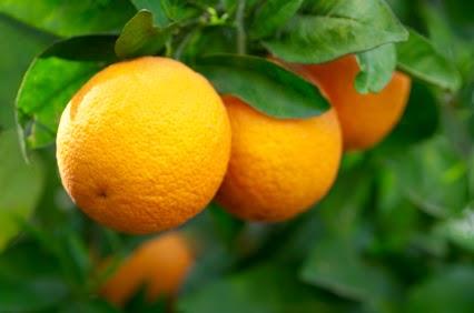 Orange - The Hue of Fall