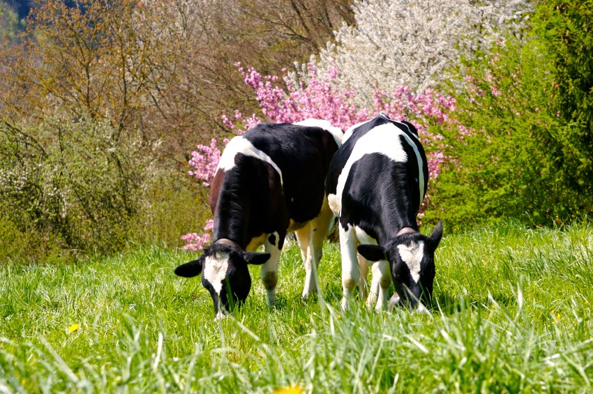 Grass-Fed and Grain-Fed – Does it Matter?