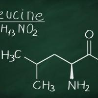 leucine-new